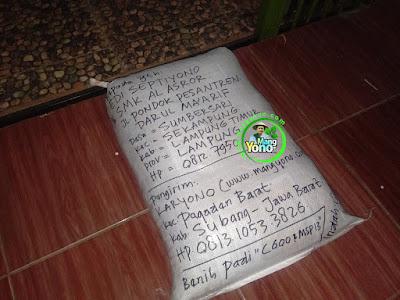 Benih Padi Pesanan  EDI SEPTIYONO Lamtim, Lampung  Benih Sesudah di Packing