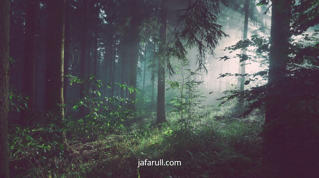 Ciri-ciri hutan hujan tropis dan hutan musim