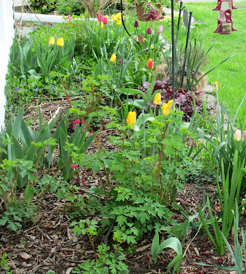 Front Yard Spring Flowers-Vickie's Kitchen and Garden