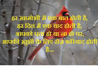 Hindi love status shayri