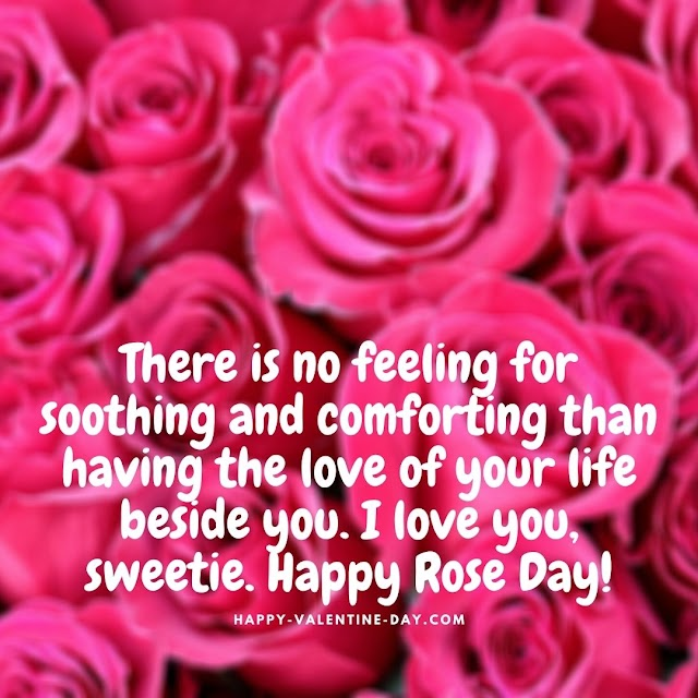 Rose Day 2021 - Rose day Quotes, Images, Gift ideas, Status ideas for valentine week
