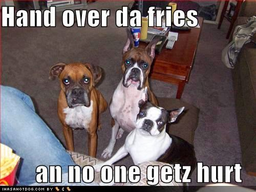 Funny dogs with sayings   LoL Picture Collection