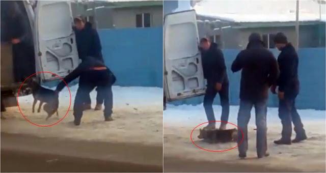 Подростки заживо сожгли щенка. Казахстанцы просят более строгого наказания