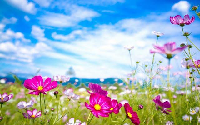 hình ảnh hoa đẹp nhất thế giới 10
