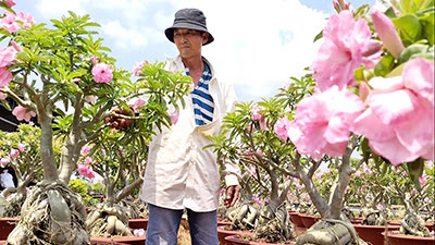 Anh Sỹ chăm sóc vườn sứ Kỳ Duyên