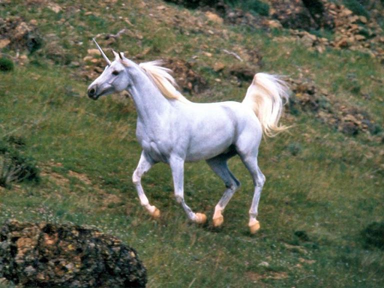 Unicornio subiendo el monte