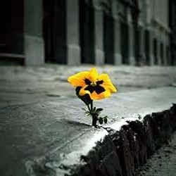 Onde há vida, há esperança