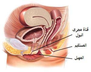 التهاب-المثانة-مجاري-البول
