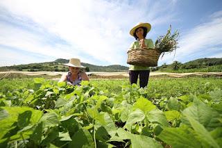 CES/UFCG lança nova chamada pública para aquisição de alimentos da agricultura familiar de Cuité e região