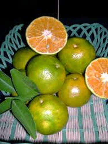 manfaat jeruk baby, jus jeruk bagi bayi