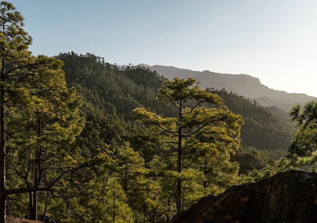 Wandern auf Gran Canaria – Von El Juncal ins Naturschutzgebiet Pajonales 06