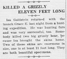 Isa Goldstein returned with the launch Grace E. last night from a hunting expedition. He was hunting furs and was very successful, too. somebody killed two big grizzly bear, because Isa brought the skins home. Two of these skins are enormous in size, one is at least 11 feet long. They are both beautiful specimens.