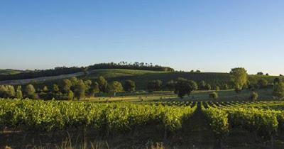 Il vino del naufragio è molto probabilmente proveniente da un vigneto nel sud-ovest della Francia.