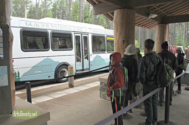 glacier national park going the sun road bussing shuttle service family hiking trip summer vacation