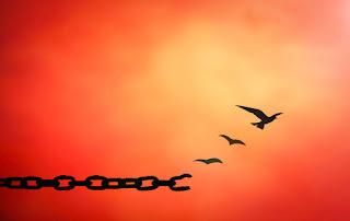 Quem mais ganha quando perdoa é o próprio perdoador (At. 20:35). A pessoa se livra de um peso desnecessário, que nada acrescenta e que só traz dores. Então, liberte-se dos lixos emocionais, dê uma nova chance para si mesmo, libere perdão, não precisa esquecer e apagar da sua mente o que aconteceu para que a pessoa não volte a te tratar ou fazer mal mais uma vez, mas lembre-se do que aconteceu e perdoe, libertando-se do peso de maneira que aquilo jamais volte a te causar dor novamente. Você é muito mais forte e melhor do que pensa ou imagina.