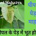 पिपल के पेड़ का महत्व | पीपल के पेड़ में क्या भूत का निवास होता है ? Pipal ped ka mahatva |