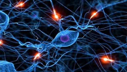 ¿Cuál es la unidad funcional del sistema nervioso?