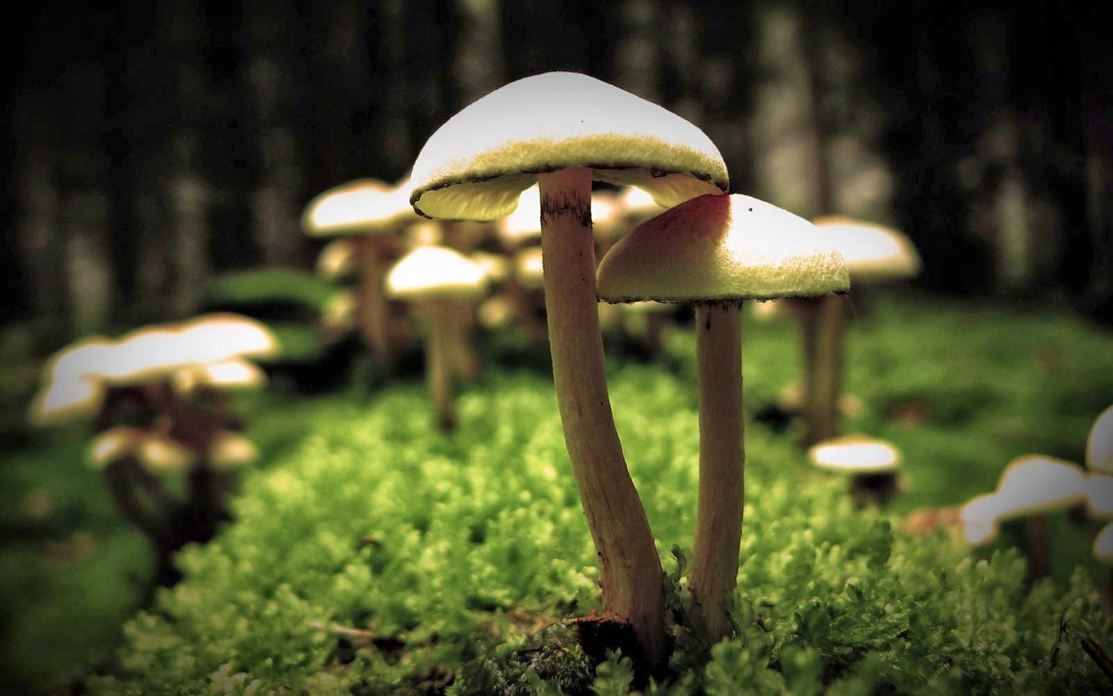Wallpapers Mushrooms Wallpapers