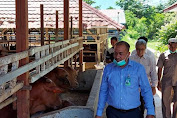 Menjaga Ketahanan Pangan, Bank Aceh Syariah KPO Tingkatkan Pembiayaan Usaha Penggemukan Sapi