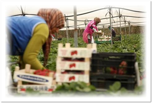 مجموعة نسائية تتذكّر عاملة زراعية شابة متوفية