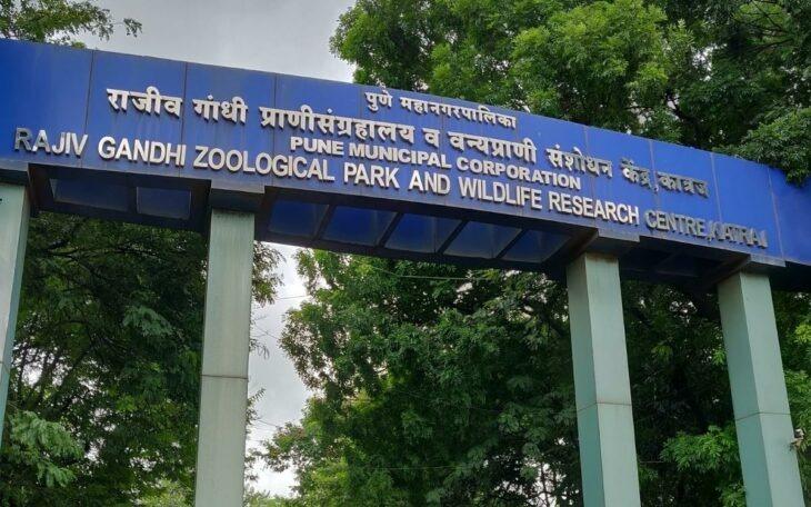 El hombre indio que vivió 72 horas con serpientes venenosas