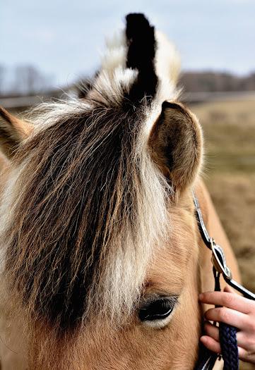 أجمل صور خلفيات خيول 6