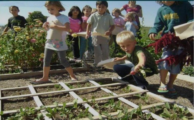 This Is Why Children Should Learn How To Grow Food As Part of Their Schooling