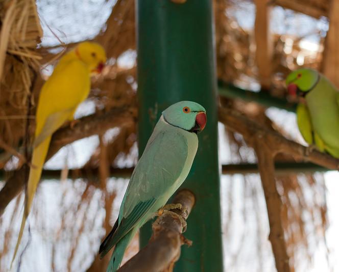 anizam agrofarm Kuala Lumpur Bird Park