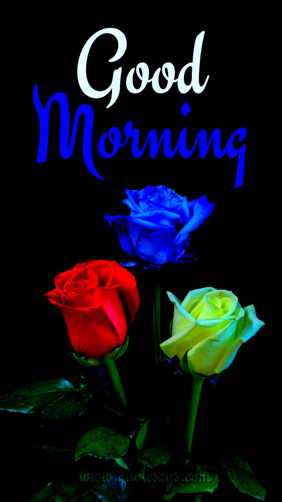 Good Morning Three Rose Flowers