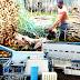 Wood Pellet ไม้ยาง 1 ล้านตัน/ปี ป้อนโรงไฟฟ้าชีวมวล  : ญี่ปุ่น – ไทย ลงทุนระยะยาว