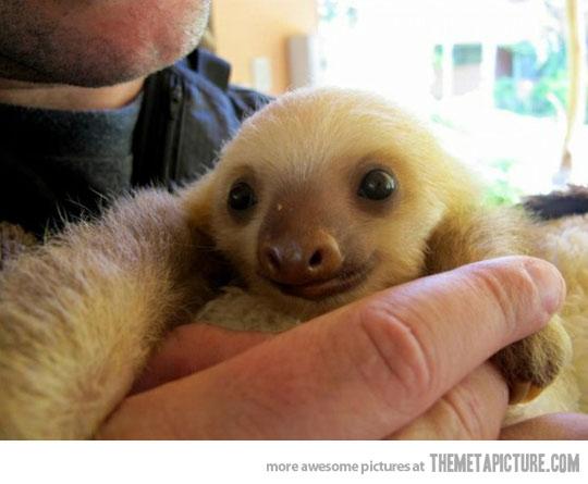 newborn baby sloth