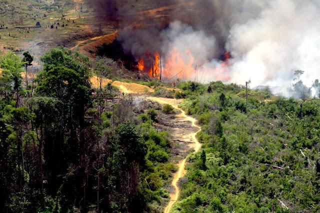 Kebakaran hutan, perusahaan perkebunan dinilai mengabaikan peringatan pemerintah