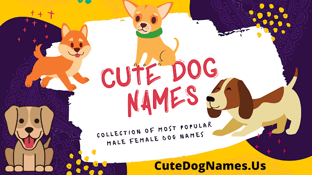 Cute Dog Names