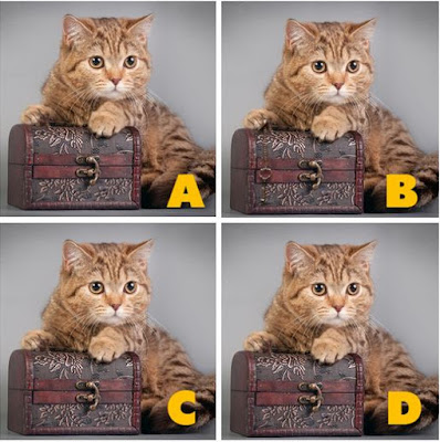 Which image is different? image3