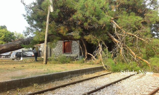 Πτώση πεύκου στο σιδηροδρομικό σταθμό είχαμε σήμερα το πρωί.  Ευτυχώς δεν είχαμε θύματα!
