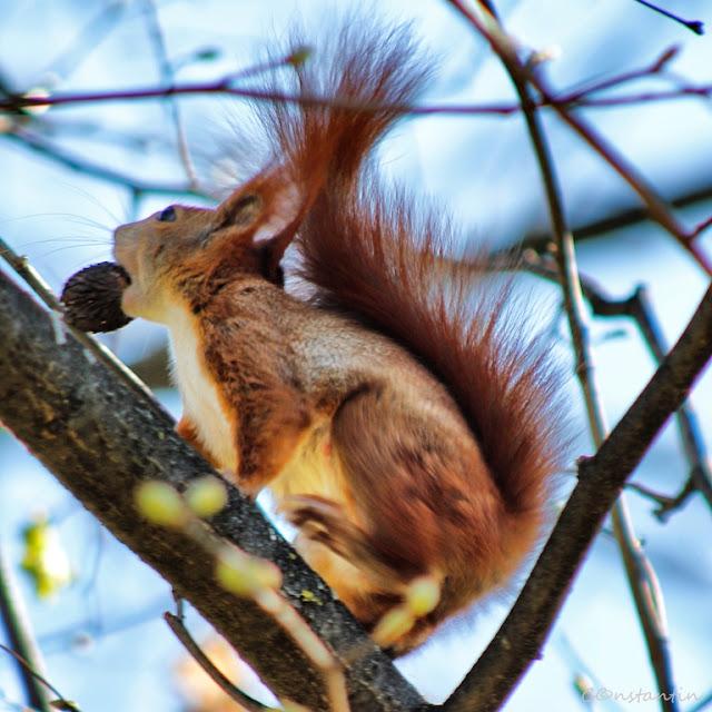 Semne de primavara - o veveriță ut și o nucă - blog FOTO-IDEEA