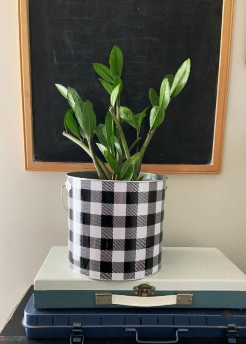 Buffalo Check bucket to hold houseplants.