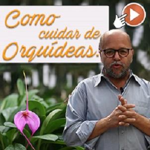 Cultivador de Orquídeas Com Mais de 20 Anos de Experiência revela tudo sobre o cuidado de orquídeas! (Curso Online)