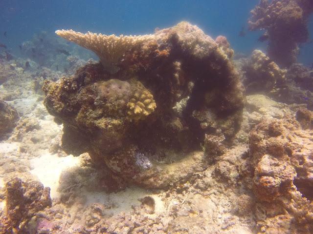 Lagi, Ribuan Benda Berbentuk Batako Ditemukan Di  Laut Kepulauan Selayar