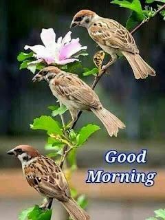 Good morning wish Bird  wallpaper 2020