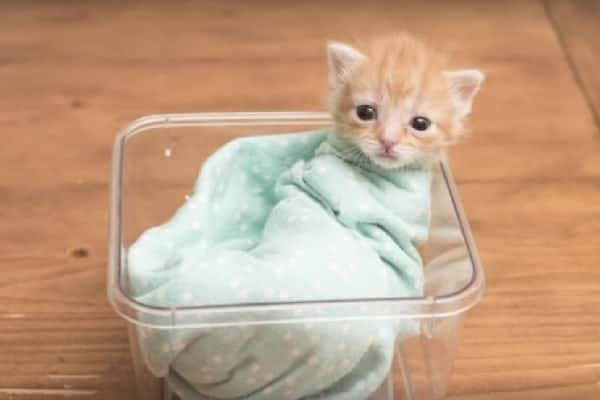 Man Leaves Unwell Infant In Tissue Box At Animal Shop, They Call Kittycat Miracle-Worker