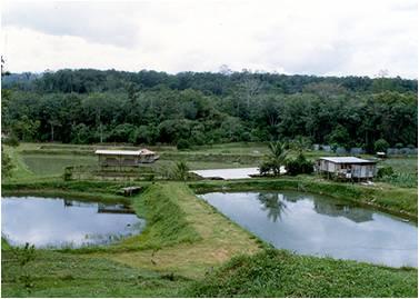 Kriteria Pemilihan Pembinaan Tapak Kolam Ikan Talapia