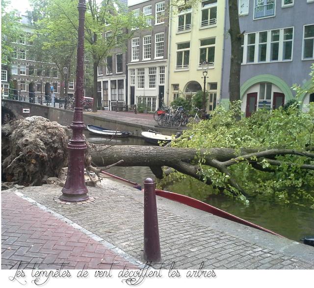 lifestyle -blog- expat the netherlands -amsterdam