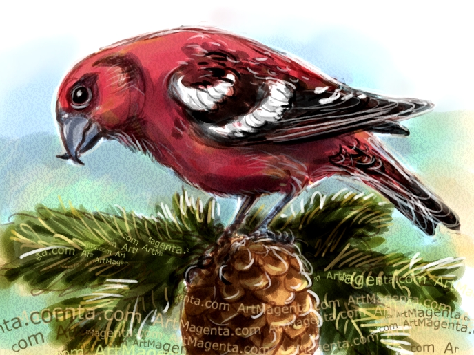 Two-Barred Crossbill sketch painting. Bird art drawing by illustrator Artmagenta
