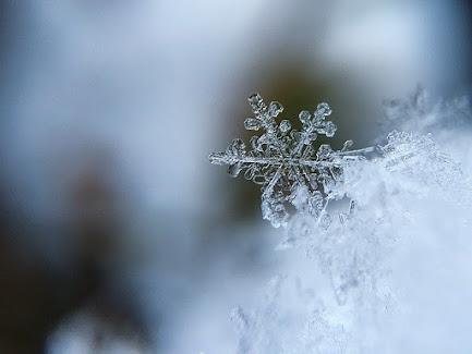 Winter Scene with Iciciles