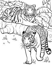 Tigers Family On Forest Coloring Pages Wild Animals
