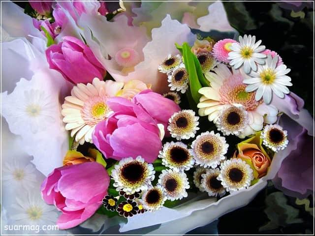 صور ورد - خلفيات ورد 1 | Flowers Photos - Roses wallpapers 1