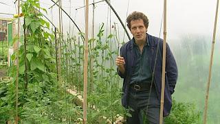 Monty Don Tomato plants