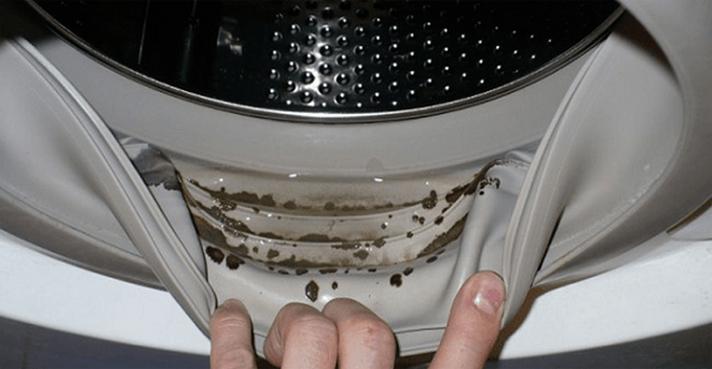 Cómo quitar el moho peligroso y olores desagradables de su ...