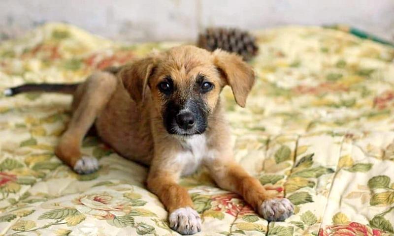 Ημέρα υιοθεσίας σκύλου το Σάββατο στην Αλεξανδρούπολη